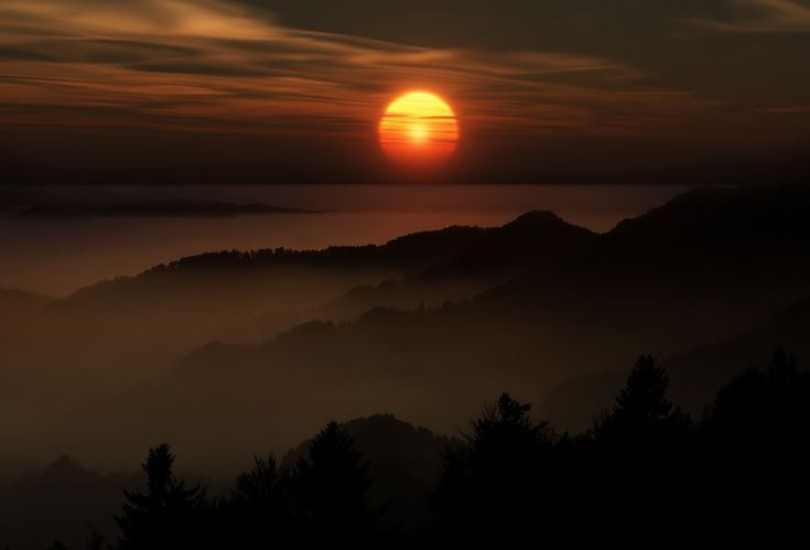 Hazy sun   forest, sunlight, sun, fog