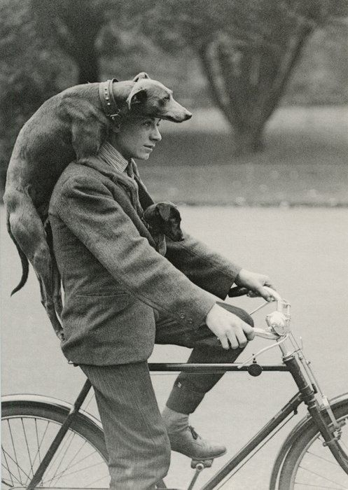 Dog on man on bike.