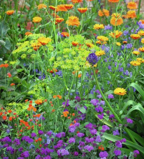 15 best perennial plant combinations images on pinterest for Perennial plant combination ideas