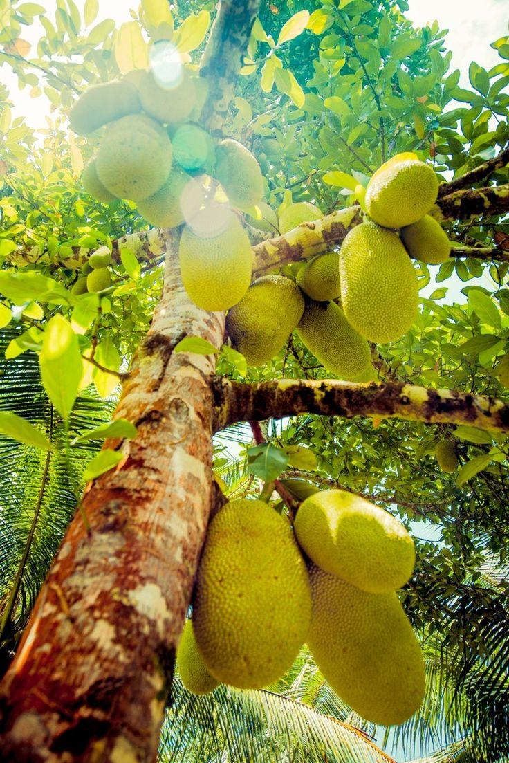 17 best jamaica for kids images on pinterest jamaica