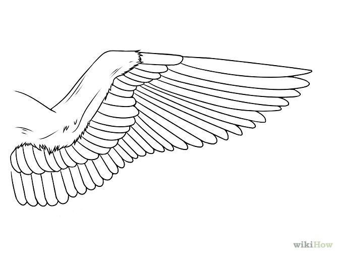 Gallery For gt Dove Wings Drawing