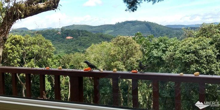 Pássaros vêm se alimentar no Recanto Família Fragoso, uma pousada romântica e aconchegante, no alto de Monte Verde, sul de Minas Gerais.