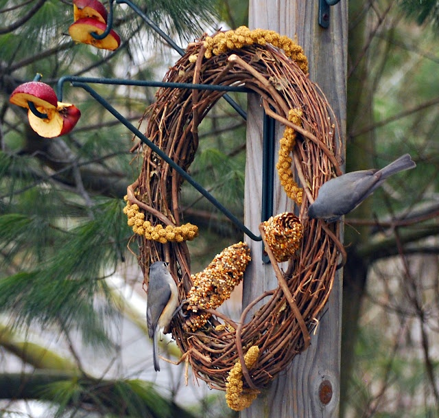 33 best Feed the Birds (& Squirrels!) images on Pinterest ...