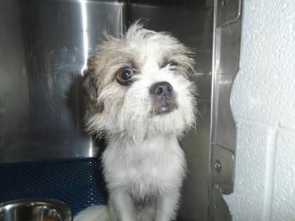 URGENT!!! At Risk To Be Killed: Sep 2, 2016! ID# 33165538 Breed:Terrier Age: Adult Gender: Female Size: Small Shelter Information: El Paso Animal Shelter 5001 Fred Wilson Ave El Paso, TX Shelter dog ID: 33165538 Contacts: Phone: 915-842-1000 Name: Adoptions email: ESDAS@elpasotexas.gov  Read more at http://www.dogsindanger.com/dog/1470932432748#AcMsEp6ALzzUwsBX.99