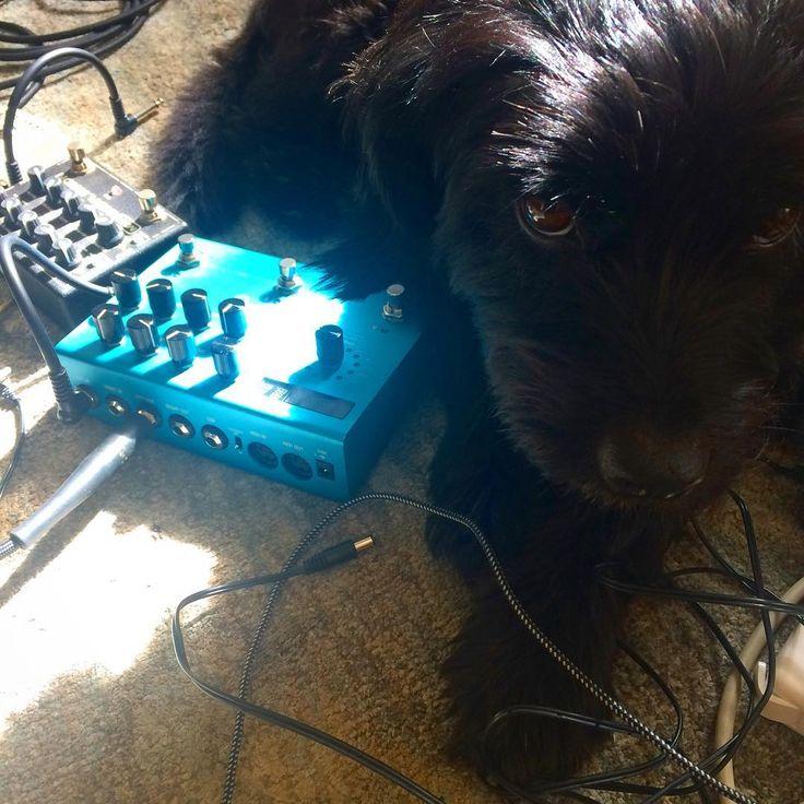 We like Gigi's musical taste :)    Instagram photo rom Gigi the Brooklyn Terrier (@gigithebrooklynterrier)