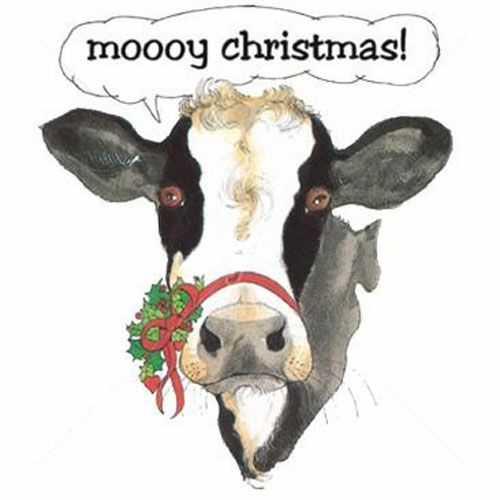 pics of cows with christmas wreaths | Christmas Cow | quotes.lol-rofl.com