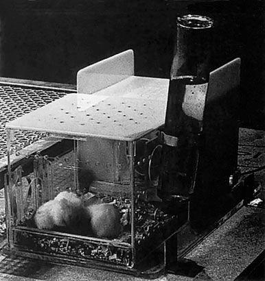 Laberinto para ratones blancos 1972 Luis Benedit