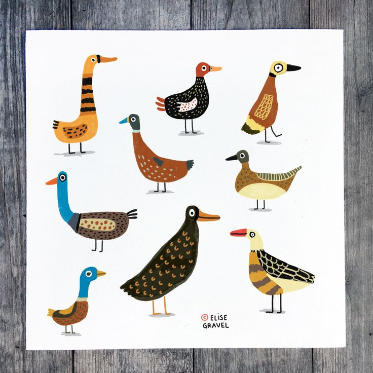 Elise Gravel • Ducks • illustration • birds • duck • drawing • painting • animals • cute • painting