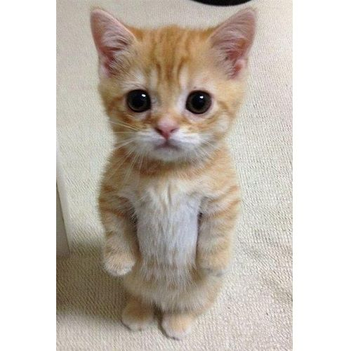 15 Of The Internet's Best Cat Photos For National Cat Day - RantPets - http://www.rantpets.com/2015/10/29/15-of-the-internets-best-cat-photos-for-national-cat-day/