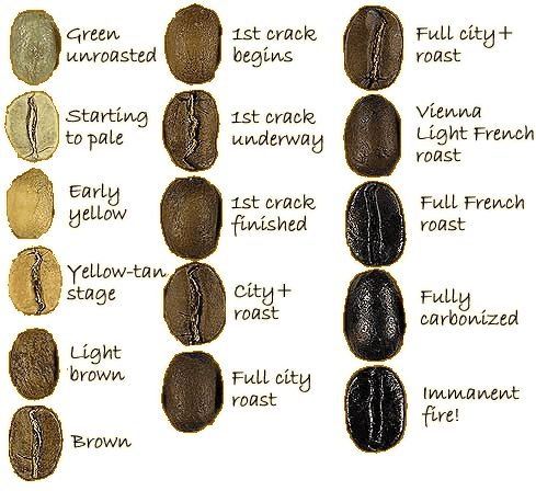 Roast Coffee Bean Levels #coffee #beans