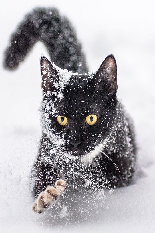 98034 Best Images About Winter Christmas On Pinterest