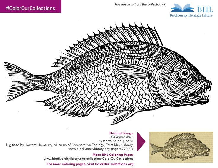 17 Best Images About BHL Coloring Pages On Pinterest