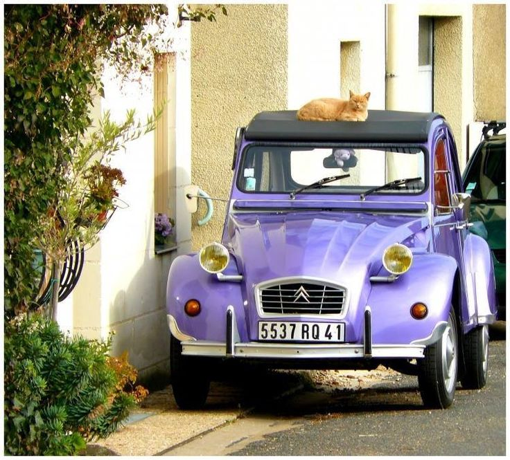Purple 2CV with contrasting orange feline friend. What a grape colour combination.