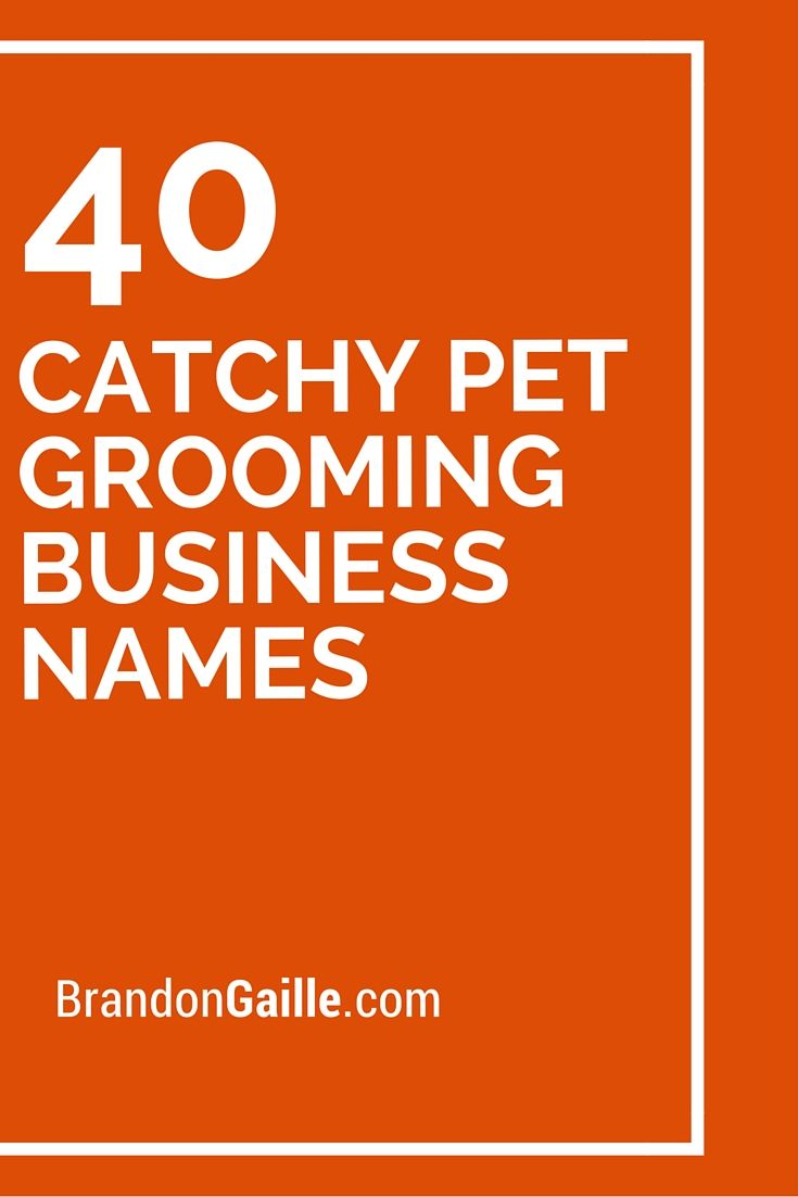 41 Catchy Pet Grooming Business Names | Dog grooming ...