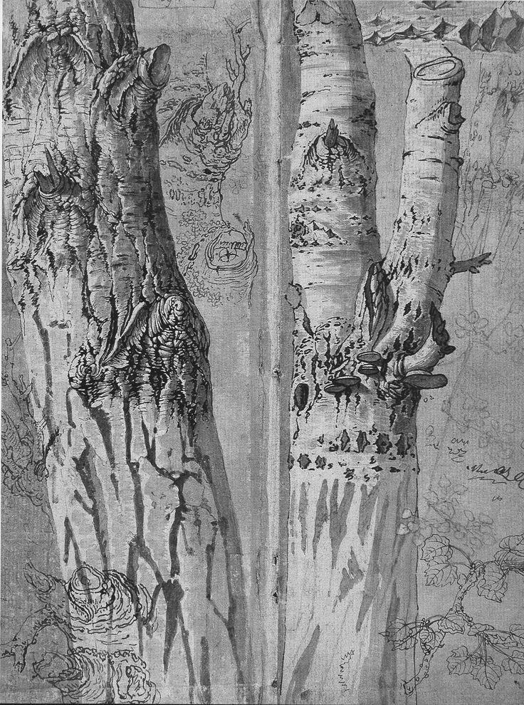Paulus POTTER, Étude de troncs au lavis et plume