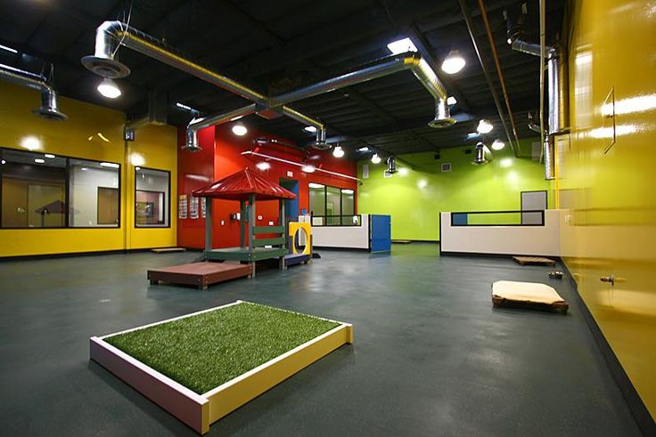 Indoor dog play facility doggie daycare ideas for Design indoor baseball facility