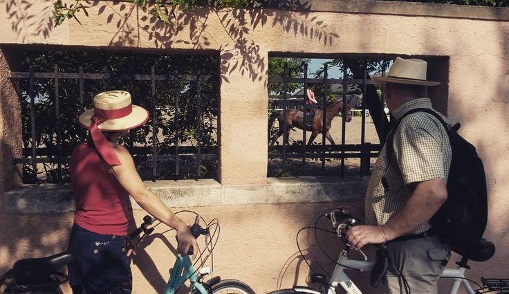 #bike #biketour #cycling #lagoon #venice @cyclecities @CyclingVenice #Malamocco