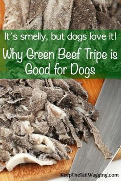Why Green Beef Tripe is Good for Dogs. Have you heard of green beef tripe and were curious about what it is, the benefits, and if it's right for your dog? Here's a post sharing what I've learned and one thing is that it's not just for raw fed dogs. Today, we can now buy fresh green tripe, green tripe treats, canned green tripe, and green tripe dry food (PetKind).
