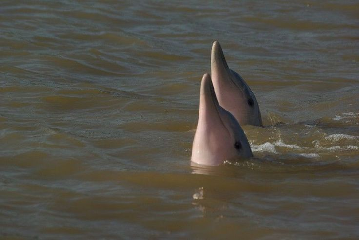 Waterproof tours : Sunset & Dolphins
