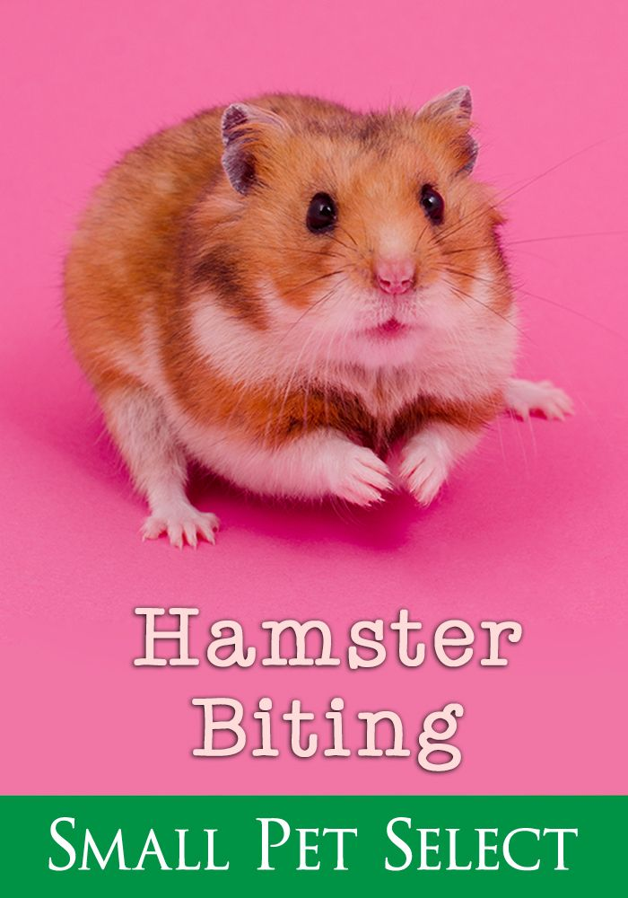 5c0d2f7fa068179a38550ab0bc8b7795 - How To Get My Hamster To Stop Biting His Cage