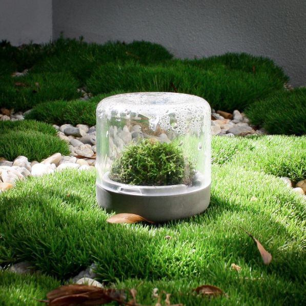 Bring the outdoors indoors with Botanica Boutique Sanctuary mossariums