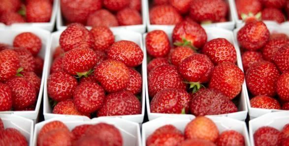 erdbeeren selber pflücken auf dem bauernhof im Zürcher Oberland