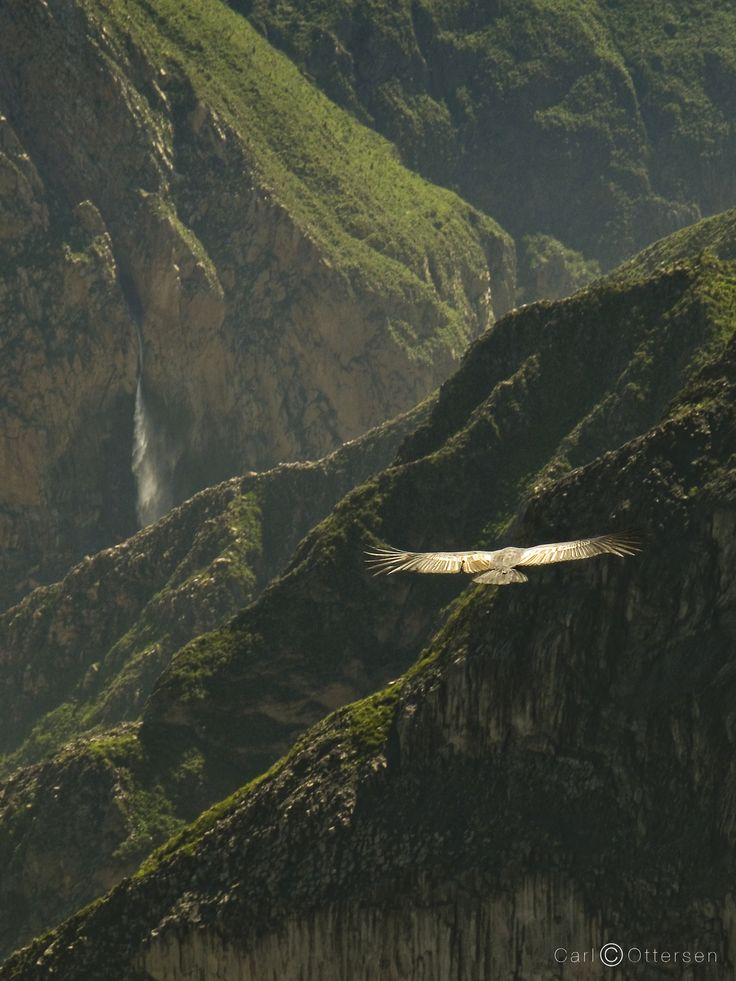Condors in Colca by Carl Ottersen on 500px
