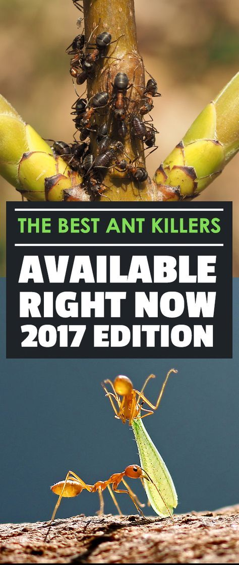 Popular The Best Ant Killers Available Right Now Edition