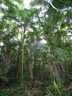 FLORA DE MISIONES Argentina: Arecaceae