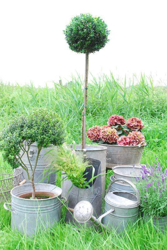 Garden zinc -: Garden Inspiration Outdoor, Garden Ideas, Country Gardens, Galvanized Containers, Garden Zinc, Container Gardening, Garden Topiaries