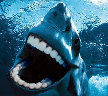 Sharks with human teeth - photo#33