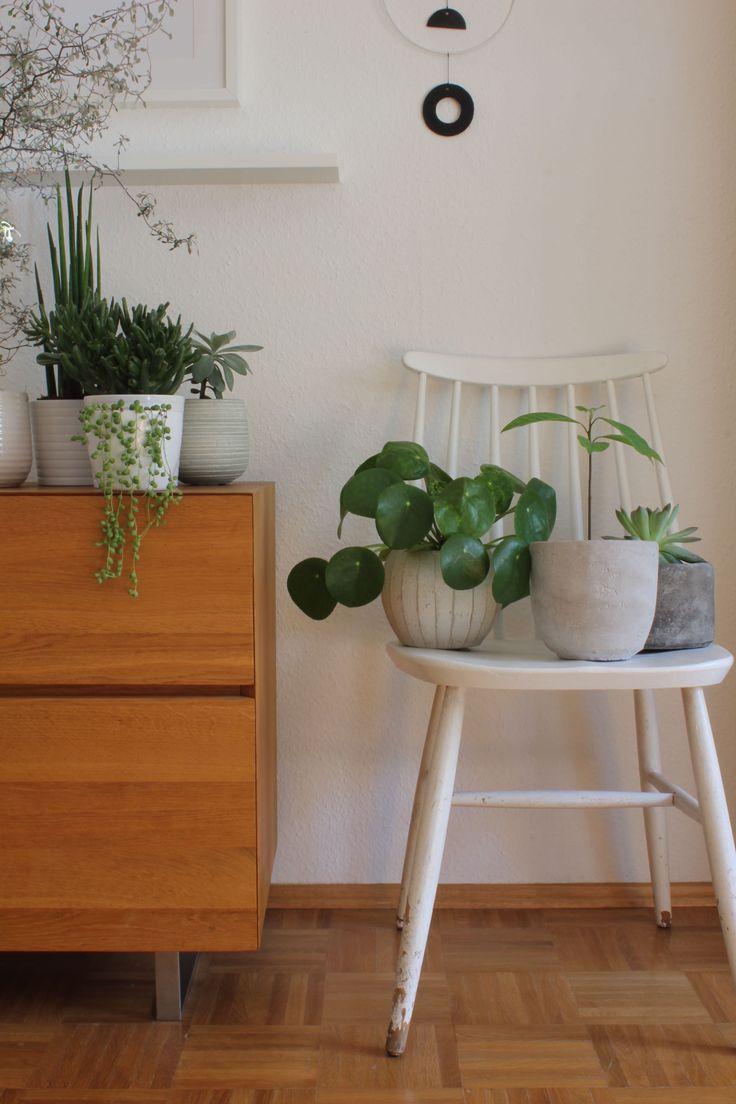 Ber ideen zu zimmerpflanzen auf pinterest for Zimmerpflanzen ideen