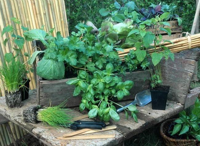 les 144 meilleures images du tableau herbes aromatiques sur pinterest herbes aromatiques. Black Bedroom Furniture Sets. Home Design Ideas