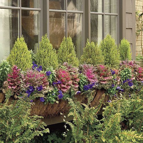 Colorful Kale   This plant delivers big, fat texture and bold hues throughout winter.