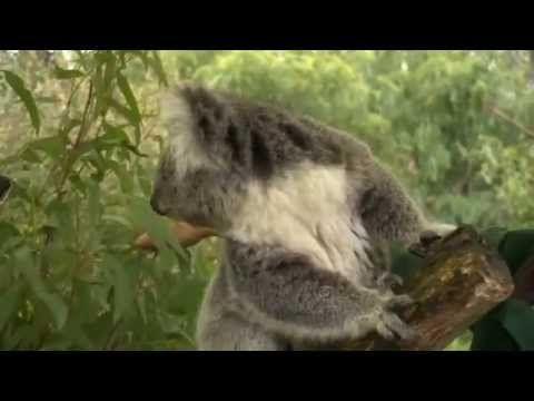 Koala Kids learning