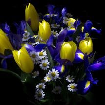 6th June - Sweden's National Day -blue and yellow are the colours