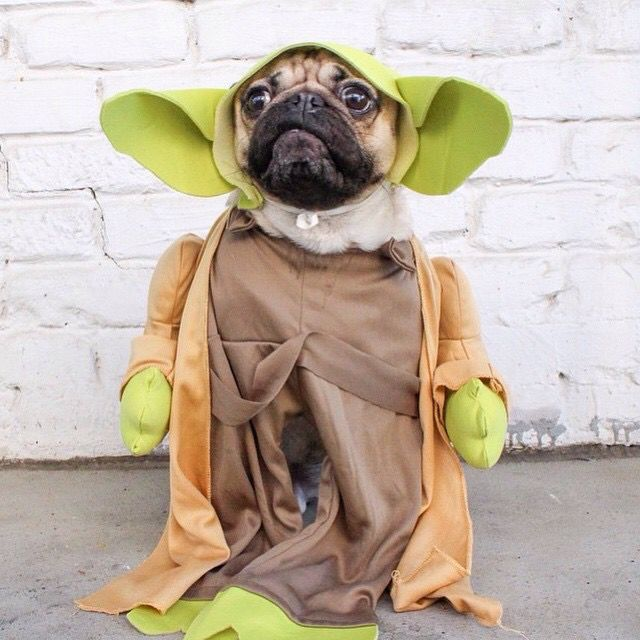 May The 4th Be With You Cat: 17 Best Images About Halloween Animals On Pinterest
