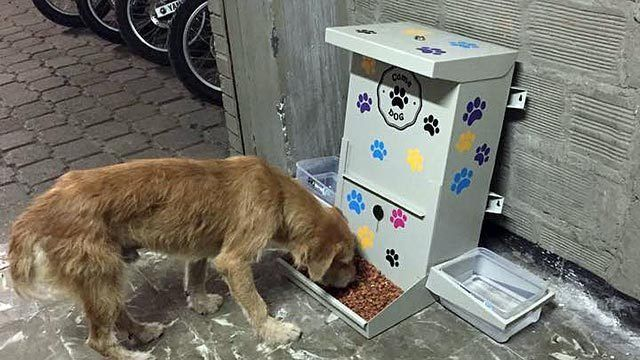 Petition · Food and water dispenser for stray dogs in Argentina · Change.org