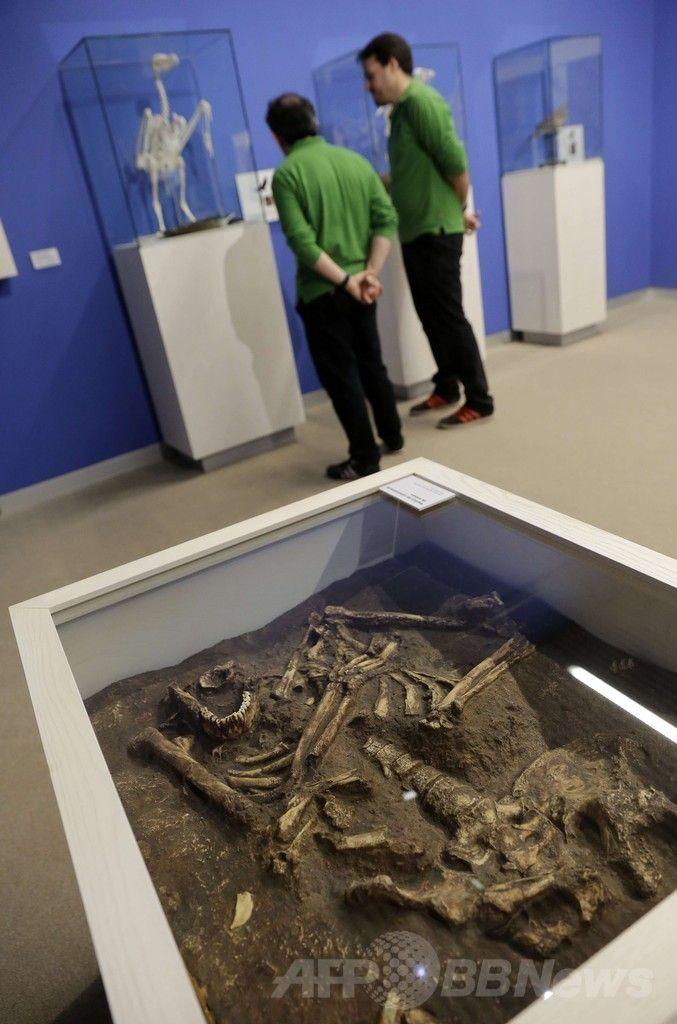 スペイン・ブルゴス(Burgos)の人類進化博物館(Museum of Human Evolution、MEH)で展示されているネアンデルタール人の骨の復元模型(2014年6月10日撮影)。(c)AFP/CESAR MANSO ▼11Jun2014AFP|ネアンデルタール人の「科学的な」復元模型、スペインで展示 http://www.afpbb.com/articles/-/3017379 #Neanderthal #Homo_neanderthalensis #Homme_de_Neandertal #Neandertaler #Physical_model