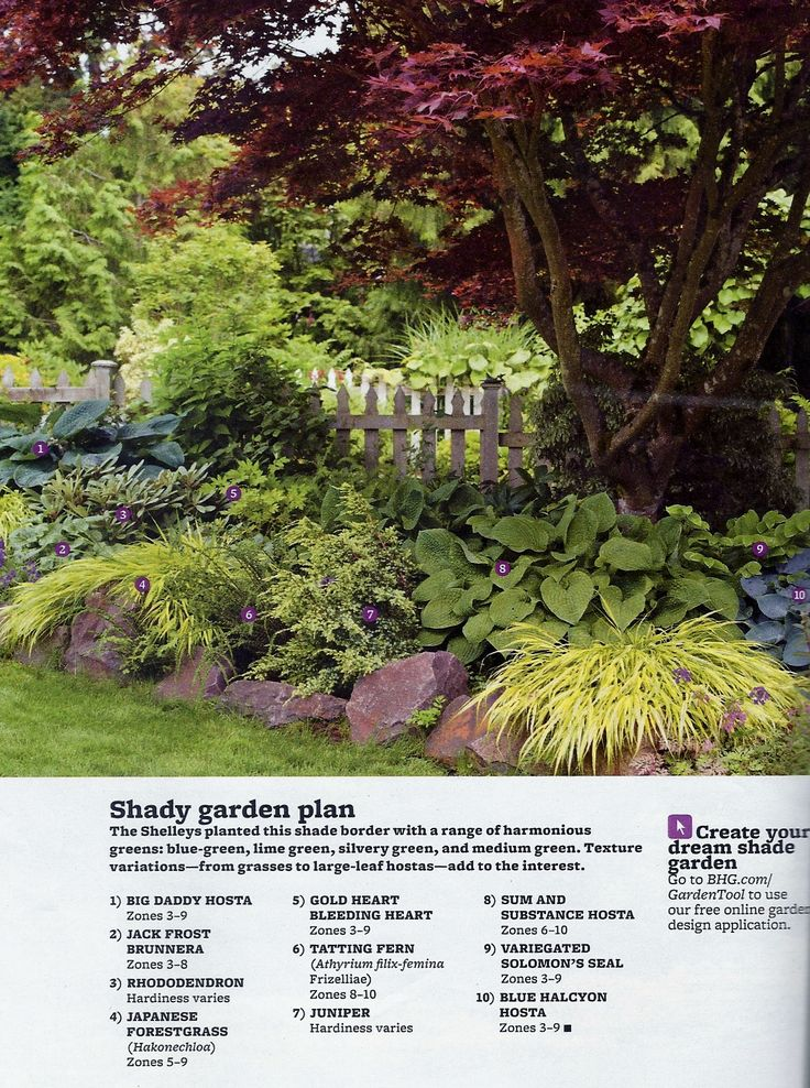 Best 25 shade garden plants ideas that you will like on pinterest for Better homes and gardens media kit