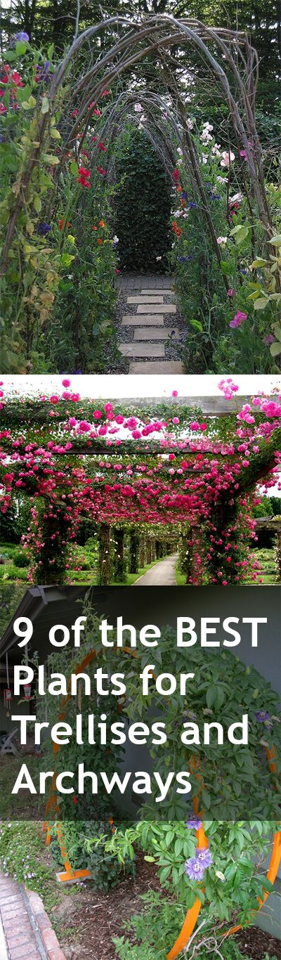 9 of the Best Plants for Trellises, Archways and Arbors. These beautiful plants are perfect climbers for your landscape.