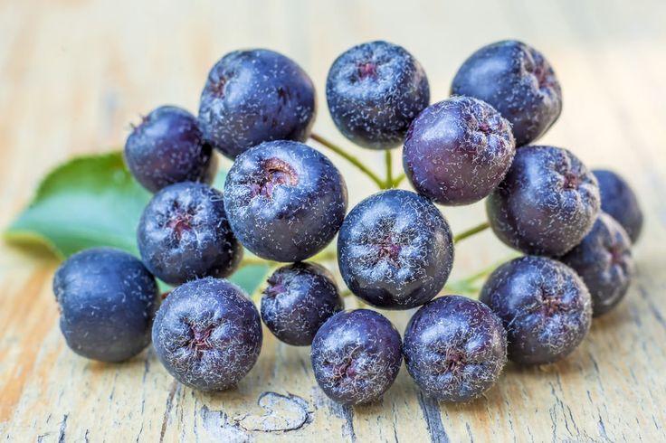 Aronia Beeren - Superfood-Gesund