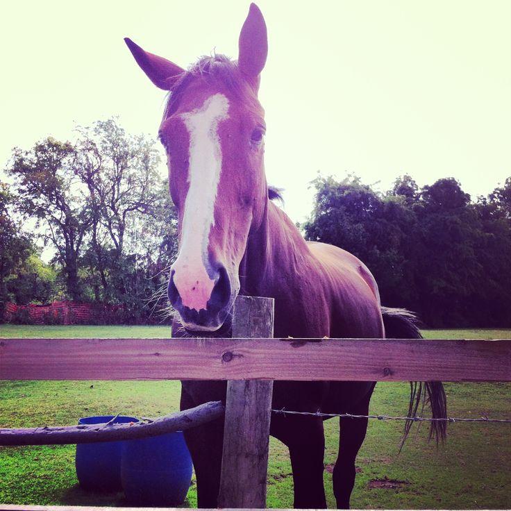 """I want more carrots please !! "" greedy horsey"