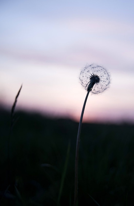 Just a Dandelion swaying in the wind.... lol