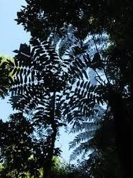 Madagascar rainforests