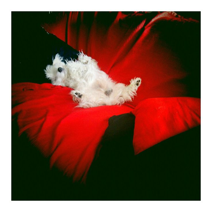 Twin Peaks dog Barry