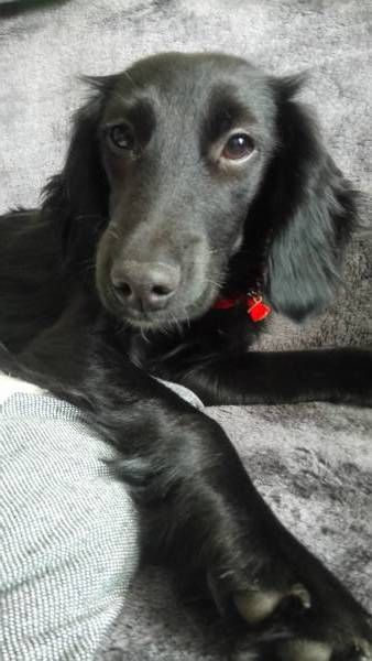 LOST DOG: 12/12/2017 - Sholing, Southampton, Hampshire, England, United Kingdom. Ref#: L38898 - #CritterAlert #LostPet #LostDog #MissingDog