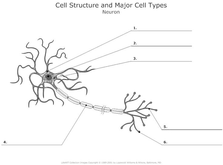 cell structure and major cell types of neuron unlabeled example tattoo pinterest cell. Black Bedroom Furniture Sets. Home Design Ideas