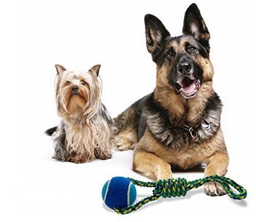 Interactive Tug of War Dog Toy - Braided Pull Rope with Twisted Woven Knot and Large Tennis Ball - Great for Medium to Large Dogs - Double the Fun with Mega Toss Ball and Pulling Rope Handle - 100% Fun Guaranteed This Interactive Tug of War Dog Toy is Braided Pull Rope with Twisted Woven Knot and Large Read  more http://dogpoundspot.com/interactive-tug-of-war-dog-toy-braided-pull-rope-with-twisted-woven-knot-and-large-tennis-ball-great-for-medium-to-large-dogs-double-the-fun-