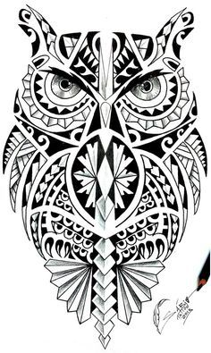 Coruja maori                                                       …